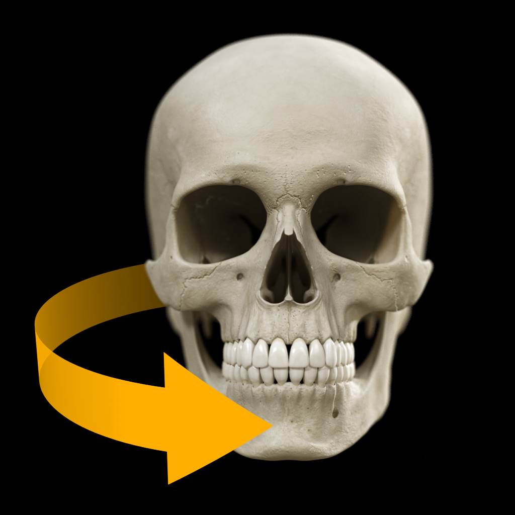 Skull - 3D Atlas of Anatomy Bei Catfish Animation Studio S.r.l.